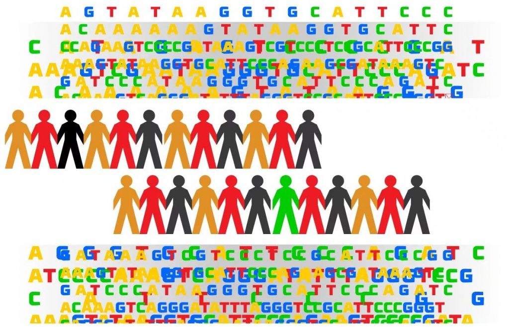 Genes Humanos